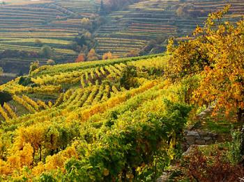 Vad betyder mikro, meso och makro i vinsammanhang?