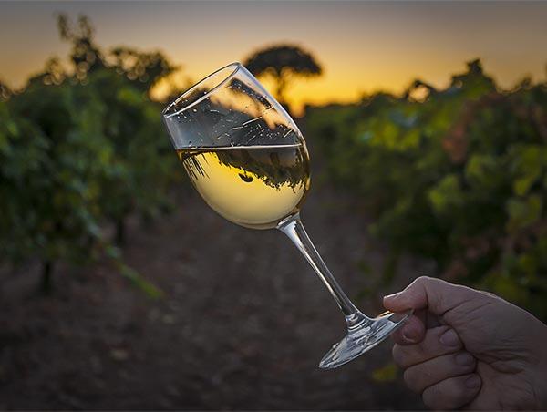 3 prisvärda viner från Australien