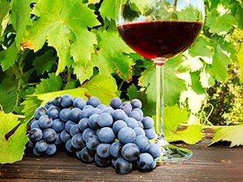 Två supertips till Pinot Noir Day