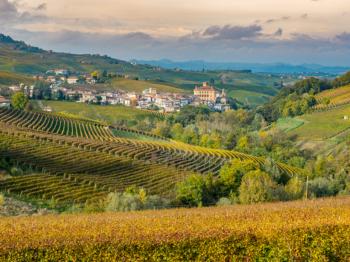 Hur smakar viner av Nebbiolo-druvan?