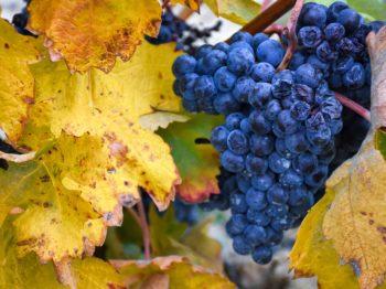 En guide till Riojas röda viner