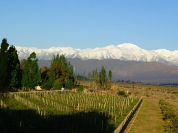 Exklusiva nyheter från Cornas, Bordeaux och Argentina
